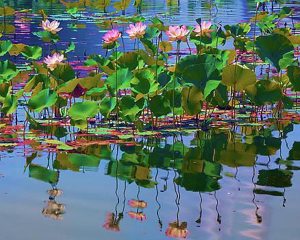 Lotus and Ripples by Ram Vasudev