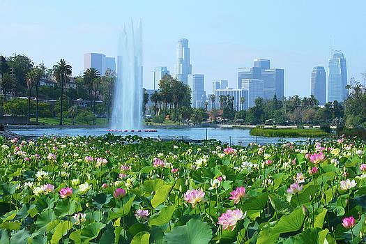 Lotus Blooms and Los Angeles Skyline by Ram Vasudev