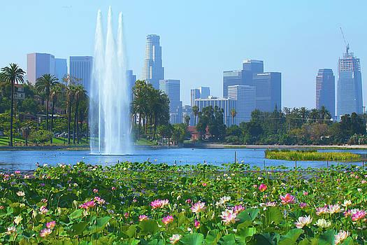 Lotus Blooms in Echo Park and Los Angeles Skyline by Ram Vasudev