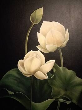 Lotus Buds by Dorothy Brooks