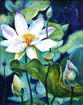 Lotus, Cycle of Life by Tamara Keiper