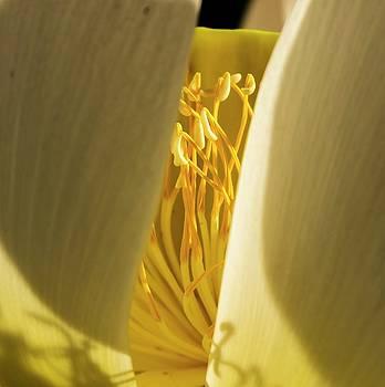 Lotus Flower 3 by Buddy Scott