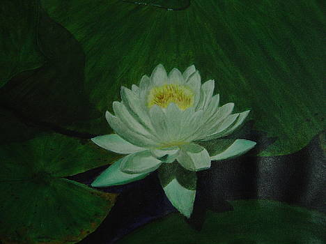 Lotus Flower by Sankara rao Bhatta
