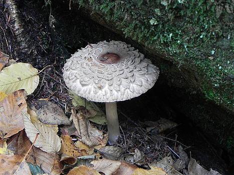 John Parry - Lotus Mushroom