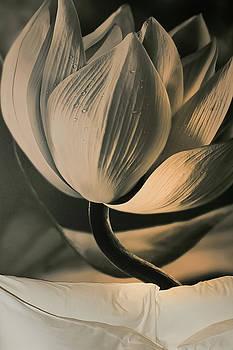 Lotus On The Wall  by Prasert Chiangsakul