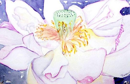 Lotus by Sandra Woods