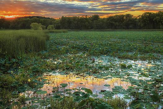 Sylvia J Zarco - Lotus Sunset Water