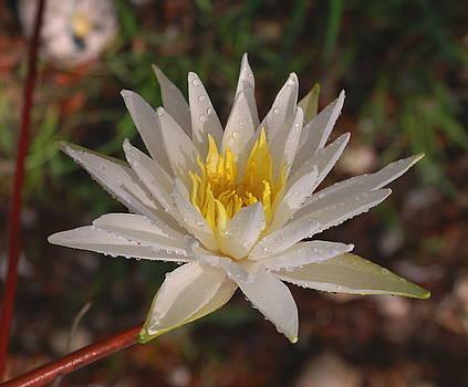 Lotus Uprising-  Debbie-may by Debbie May