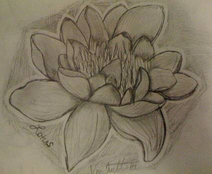 Lotus by Veronica Trotter