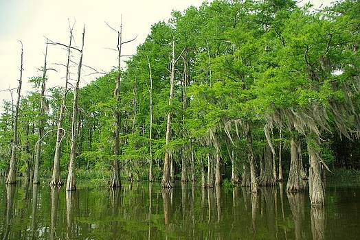 Louisiana Calmness by Tracy McDonald