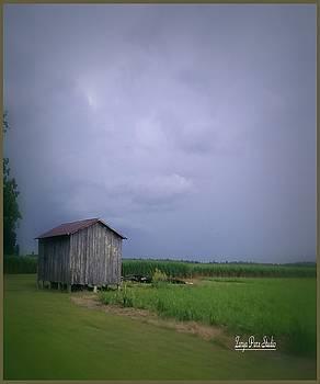 Louisiana Cane Fields by Zarya Parx  Studio