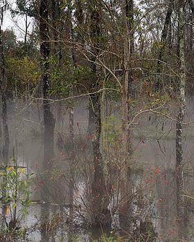 Louisiana Swamp by Benny Dupre
