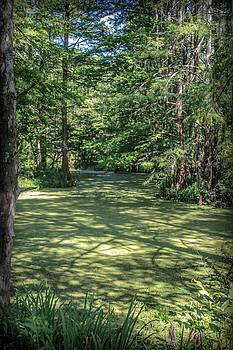 Louisiana Swampland by Angela Moreau