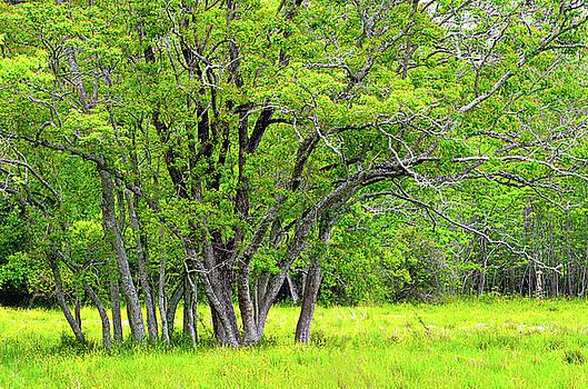 Spade Photo - Louisiana Trees