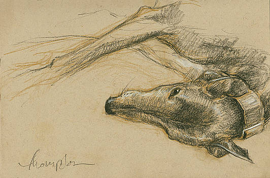 Lounging Greyhound by Tracie Thompson