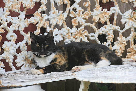 Lounging Kitty by Wendy Coulson