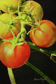 James Temple - Love Apples Digital Watercolor