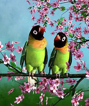 John Junek - Love Birds