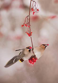 Scott Wheeler - Love Birds