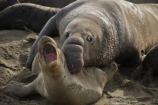 Roger Mullenhour - Love Bite