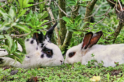 Peggy Collins - Love Bunnies in Costa Rica