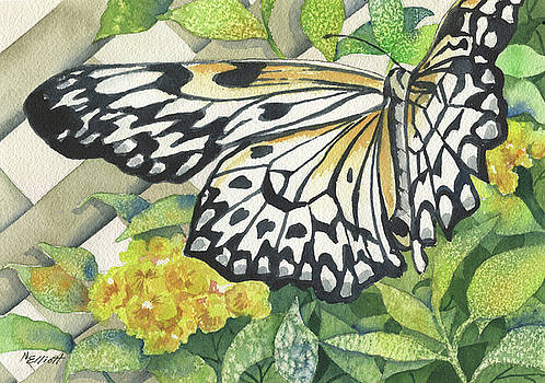 Love is Like a Butterfly by Marsha Elliott