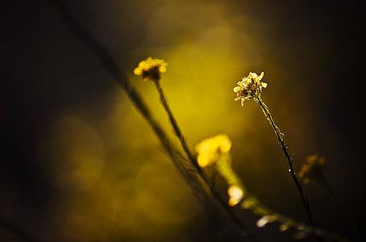 Love Is Like A Mustard Seed by Rachel Wase