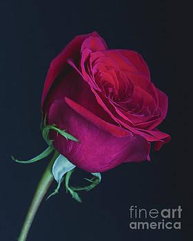 Love  by Linda Hoye