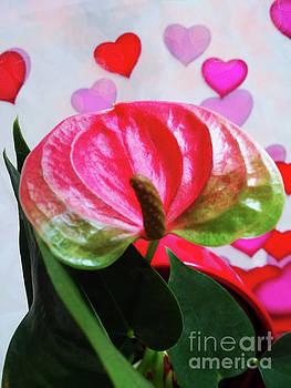 Love Me Do by Jasna Dragun