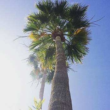Love Me Some #palmtrees! Can You Tell? by Sarah Marie