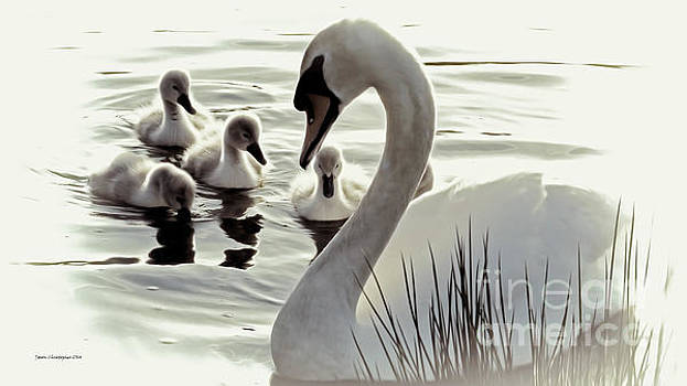 Love of Mother Swan by Jason Christopher