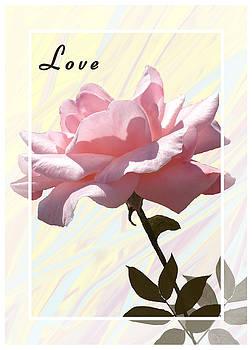 Love on Valentine's Day by Rosalie Scanlon