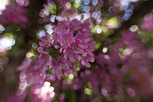 Love that Bokeh by Sharon Wilkinson