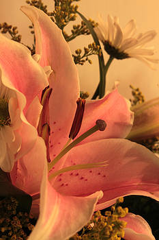 Carolyn Jacob - Love That Lily
