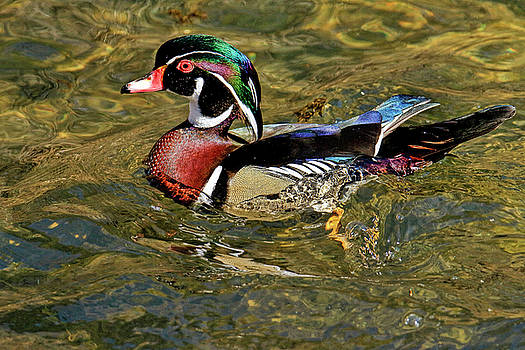 Love those wood ducks by Geraldine Scull
