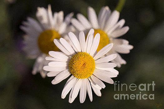 Omaste Witkowski - Love Triangle Methow Valley Flowers by Omashte