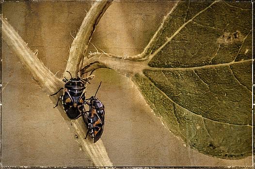 Lovebugs Version 2 by Janice Bennett
