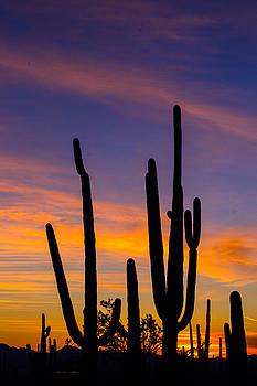 Lovely Arizona by Matt Cohen