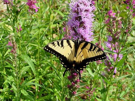 Lovely Butterfly by Bonita Waitl