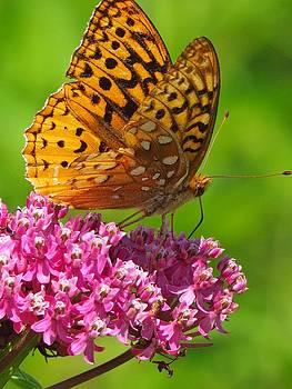 Lovely Flutterby by Lori Frisch