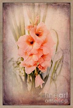 Lovely Gladiolus by MaryLee Parker