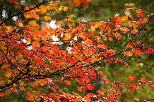 Lovely Leaves 2 by Crystal Hoeveler