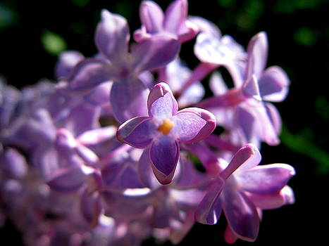 Lovely Lilac by PJ  Cloud