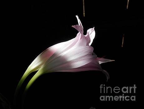 Felipe Adan Lerma - Lovely Lilies Couple Embraced