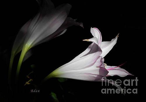 Felipe Adan Lerma - Lovely Lilies Dreams to Light Macro