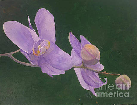 Donna Walsh - Lovely Orchid