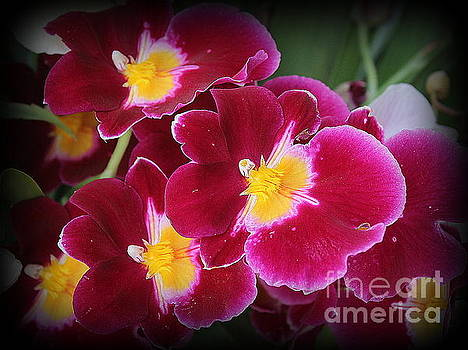 Lovely Orchids in Red and Gold by Dora Sofia Caputo Photographic Art and Design