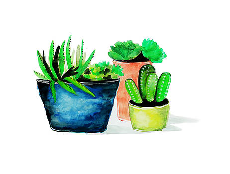 Lovely potted cactus by Rasirote Buakeeree