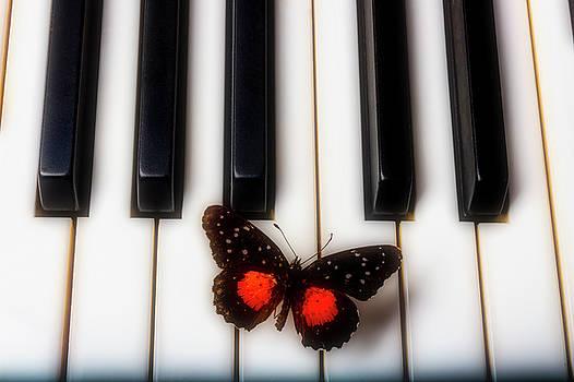 Lovely Red Black Butterfly On Keys by Garry Gay