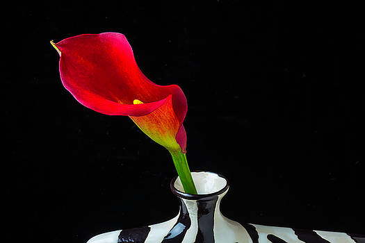 Lovely Red Calla Lily by Garry Gay